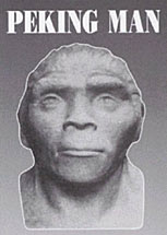 Creationist Arguments: Peking Man